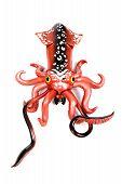 Squid Red