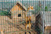 Fox In The Zoo