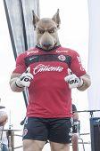 Tijuana Mascot