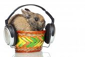 Easter Bunny Listening To Mp3 Music With Headphones