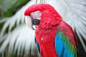 Up Close with a Scarlet Macaw