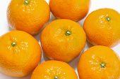 Tasty Tangerine On White Background