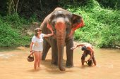 Tourists Wash and clean elephants