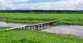 Wooden Bridge Over River In Green Field Near Forest