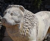 Bust of lion inTemple of Apollo Didim