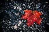 Autumn Leaf Dark Background