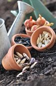 Seeds In Pots To Sowing