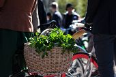 Herbs And Baguette In The Basket On A Bicycle