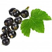 black currant berries Isolated on a white background