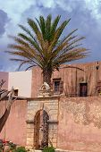 Palm tree in the courtyard of an Orthodox monastery