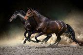 Horses gallop in desert