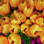 fake tulips floral background