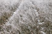 pic of icy road  - Icy road in the field on a foggy winter day - JPG