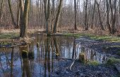 Spillage small deciduous forest river