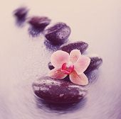 Beautiful blooming orchid with spa stones on light  background