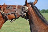 Horses telling secrets