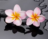 frangipani with therapy stones