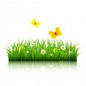 Grass With Butterfly With Gradient Mesh, Vector Illustration