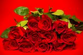 Fresh Red roses on a red background, Valentine's day gift , symbol for love or romance