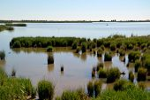 picture of boggy  - View at water and waterplants in the Ebro Delta in Catalonia Spain - JPG