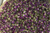 stock photo of rose bud  - Dry tea rose bud as a background - JPG