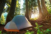 stock photo of tent  - Tent in a forests campsite - JPG