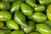 pic of avocado tree  - Avocados fruit background sell in Dalat Market - JPG