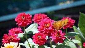 image of flambeau  - A Julia Butterfly - JPG