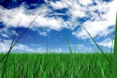 grass and a blue sky illustration - grass made in 3d, sky is a photo