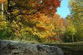 Autumn Scene 12
