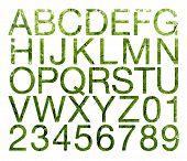 Leaf Alphabet