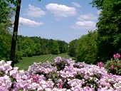 Springtime On Woodlawn Golf Course