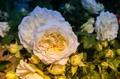 Постер, плакат: Bunch Of Cream Roses