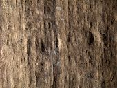 Texture Of Old Papurus