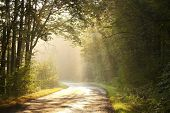 Rural road in autumn forest at dawn