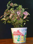 Flowerpot, It Is Painted By Hands.