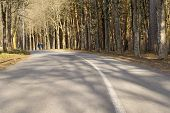 Paved Path, Path, Trail, Pathway, Footpath  In The Park Among The Trees, Pine Trees, Tree Trunks poster