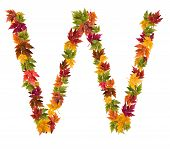 The letter W made from autumn maple tree leaves