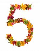 The number 5 made from autumn maple tree leaves