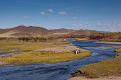Grassland And Wetland