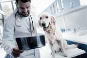 Vet Doctor. Smart Nice Professional Veterinarian Standing Near The Dog And Studying X Ray Image Whil poster