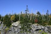 Clingman'S Dome - Insect Devastation
