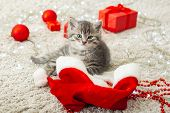 Christmas Cat. Christmas Presents Concept. Tabby Kitten In Santa Clause Hat. Portrait Of Kitten With poster