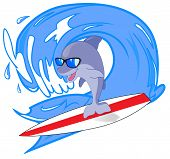 Dolphin surfer
