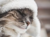 Young Kitty In A White Wool Hat poster