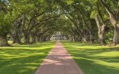 Roble Alley Plantation