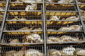 Low Angle Of Live White Turkeys In Transportation Truck Cages In Bad Conditions, Process Of Transpor poster