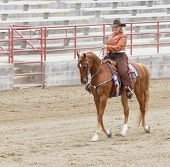 Woman Riding Saddlebred Horse