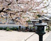 Springtime In Dainichiji, Temple Number 4 On Shikoku Pilgrimage poster