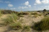 The Sandy Beach And Dunes At Studland Bay Near Swanage In Dorset On The South Coast poster